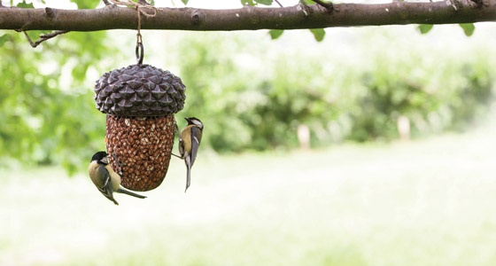 acorn bird feeder fallen fruits